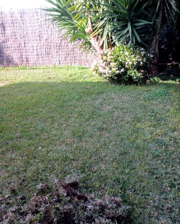 Colocar cesped natural reparaci n del techo de la casa - Poner cesped artificial sobre tierra ...
