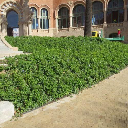 Proyectos jardiner a jardiner a l espigol en barcelona for Jardineria barcelona