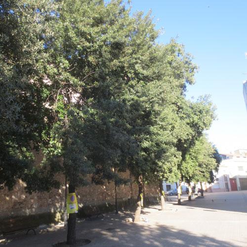 Poda para el ayuntamiento de sentmenat jardiner a l espigol for Jardineria sabadell