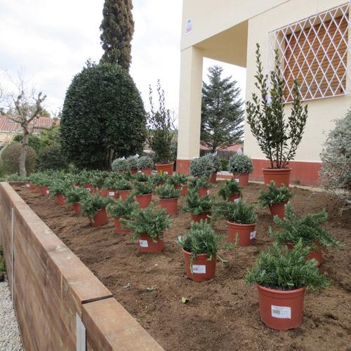 Decoraci n de jardines plantaci n de rboles arbustos y for Jardines con arboles y arbustos